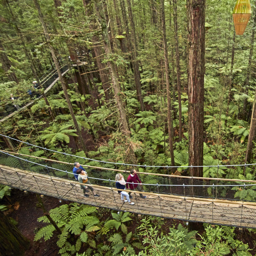 Redwood Treetop Walk 0040