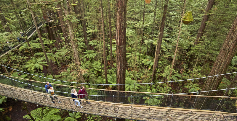 Redwood Treetop Walk 0040 v2
