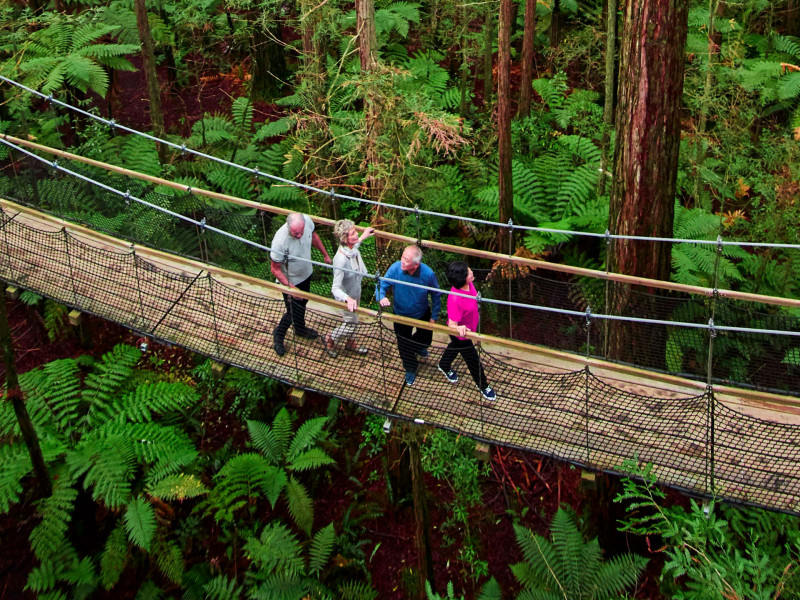 Redwood Treetop Walk Taste of the North Island hero banner